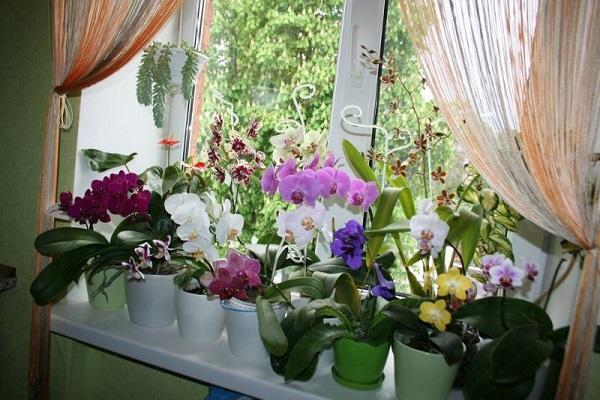 Георгины (фото) простое выращивание - правильный уход и 66